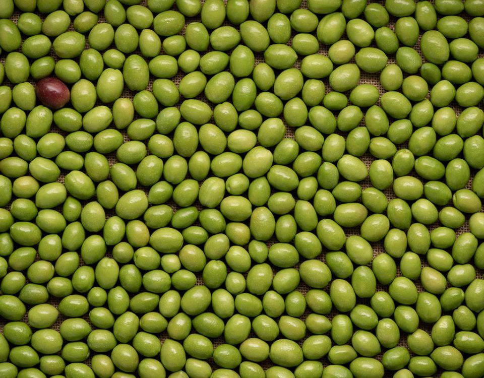 aceituna-picual-verde