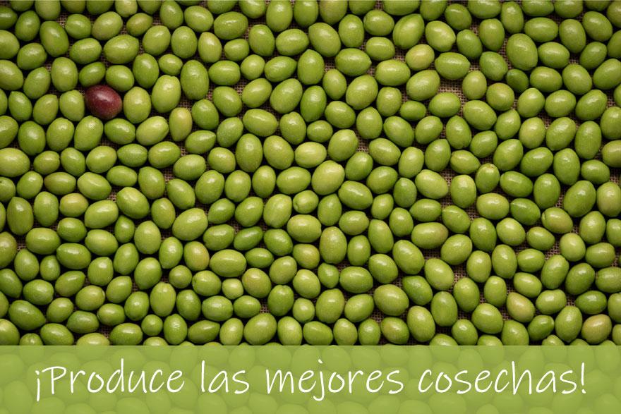 Asesoramiento en olivar