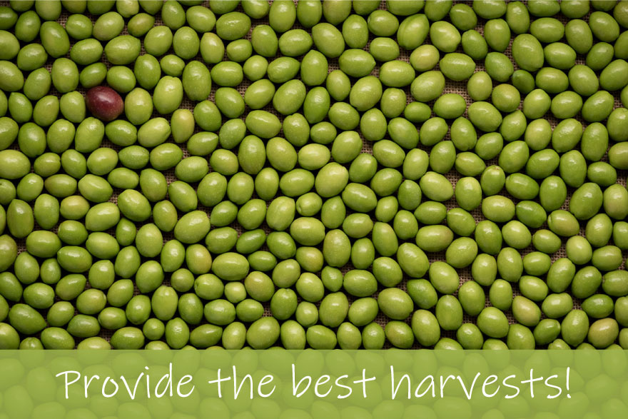Provide the best harvest